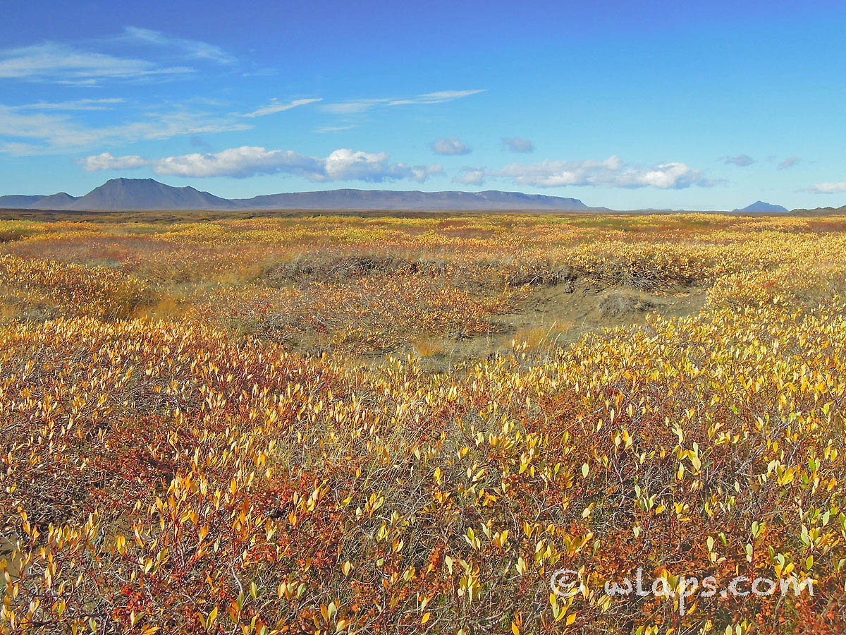 automne-paysage-islande