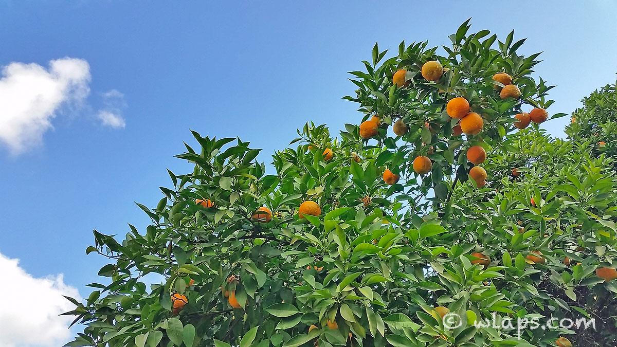 mandarine-photo-carnet-voyage-maroc-marrakech