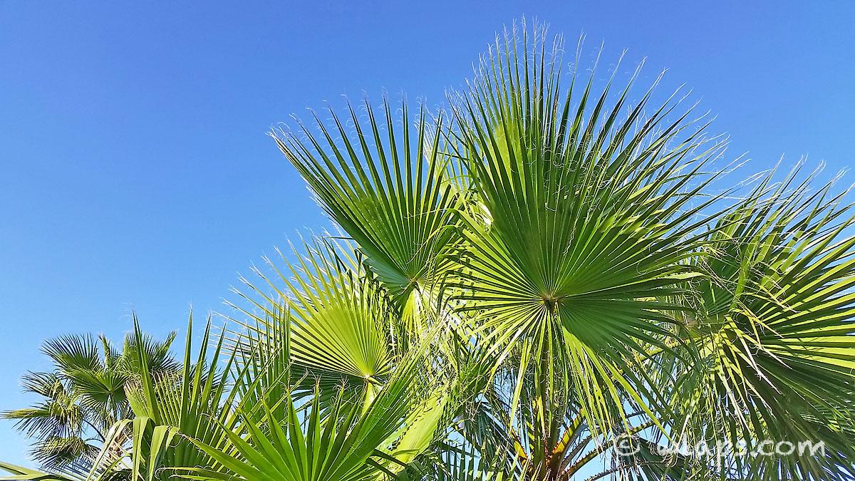 palmier-carnet-voyage-maroc-marrakech