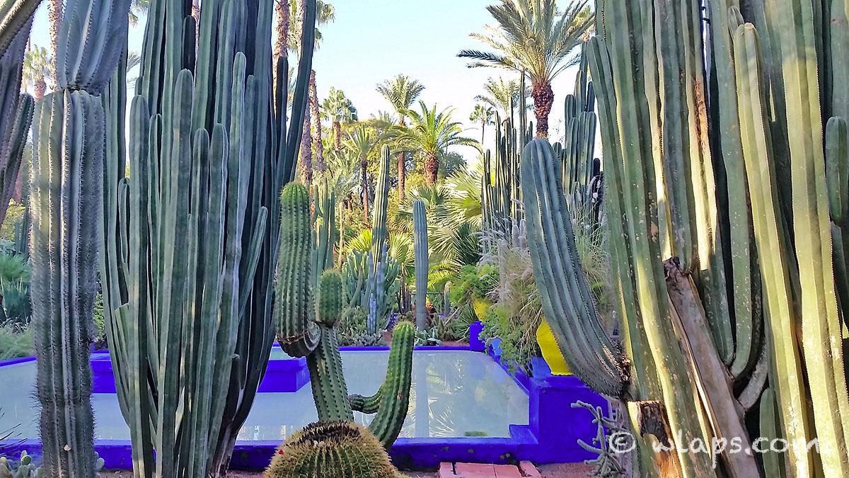 piscine-jardin-majorelle-carnet-voyage-maroc-marrakech