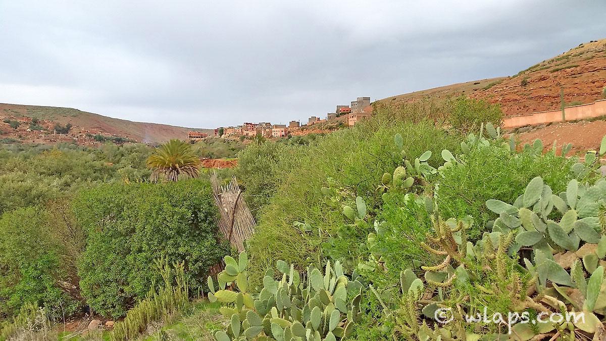 village-cactus-photo-carnet-voyage-marrakech-maroc