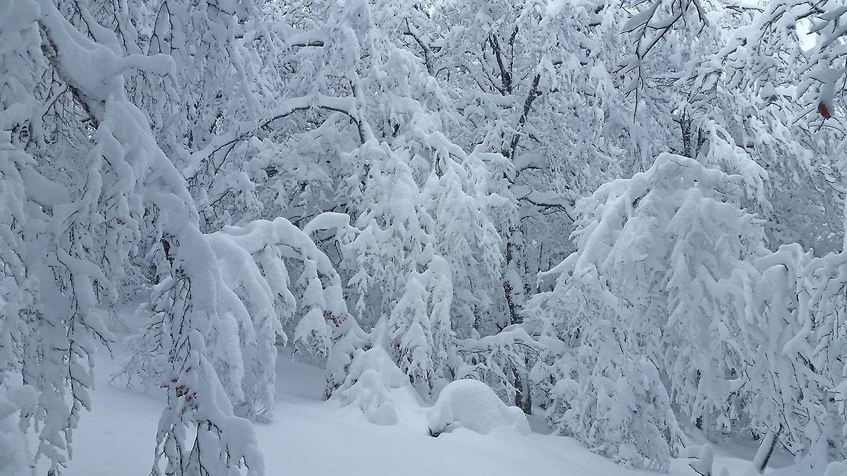 balade-photos-plateau-aubrac-neige-8