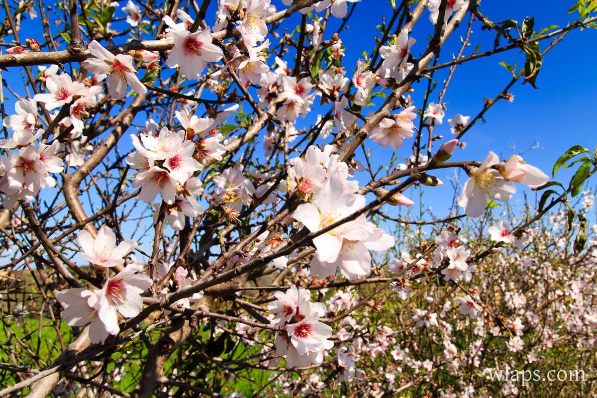 fleurs-mars-gozo